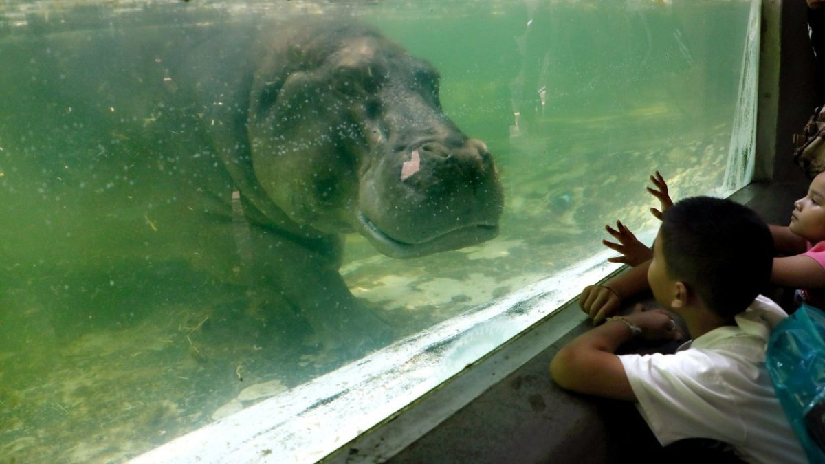 Famous Bangkok zoo about to shut after 80 years