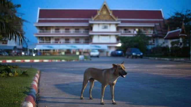 Rabies death toll climbs to 17 this year in Thailand
