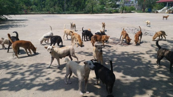 Two million stray cats and dogs by 2027. Stray dogs and cats must be registered and sterilised, otherwise their population will reach