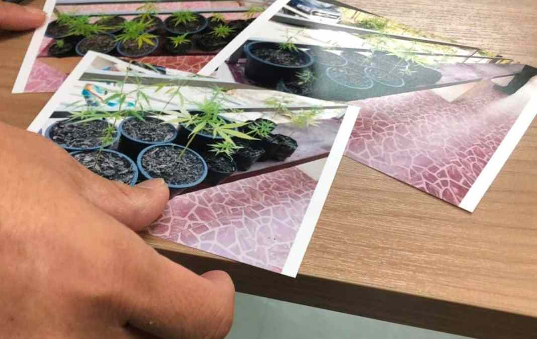 HOW TO POSSESS MARIJUANA LEGALLY IN THAILAND – RIGHT NOW