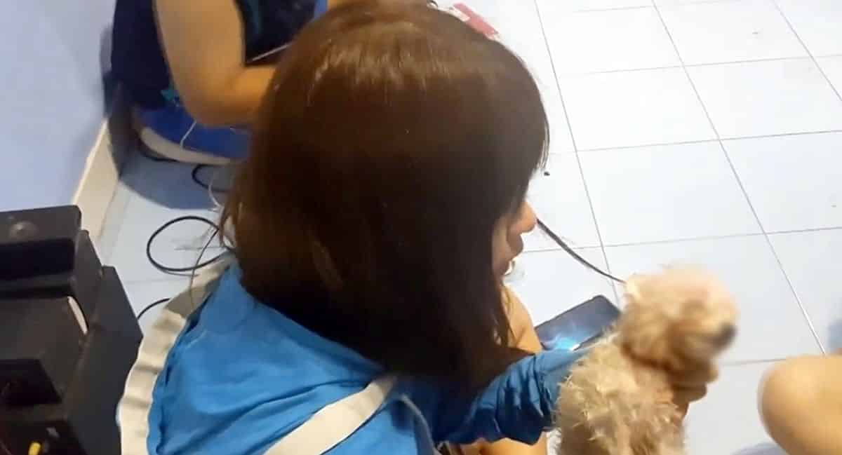 Burglar drowns Pomeranian before stealing computer, cash in Udon Thani