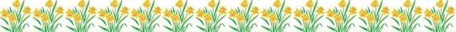 daffodil row.jpg