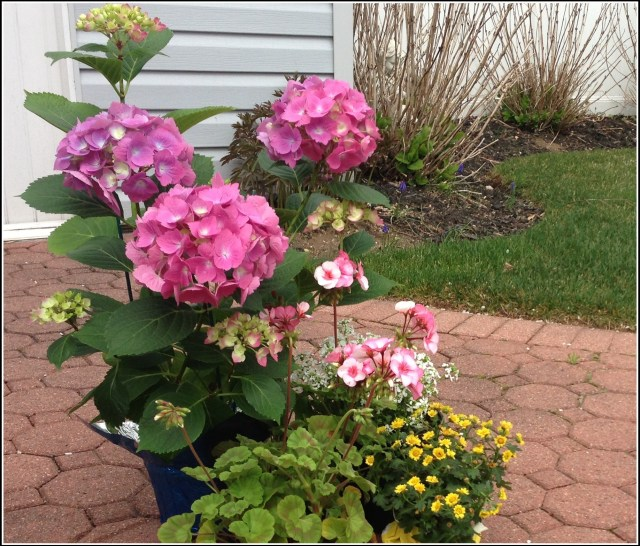 pm flower cropIMG_4427.jpg