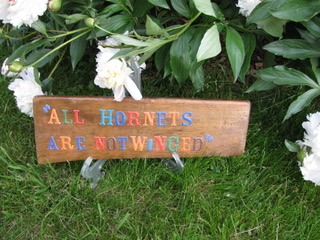 All hornets are not winged