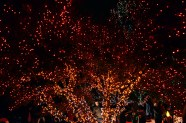 red-tree