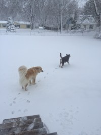 Honey and Milo absolutely loving this weather!