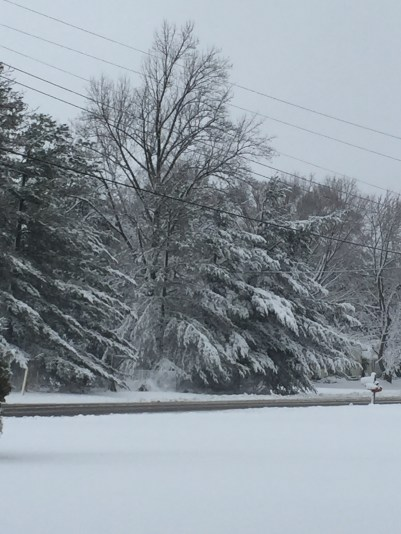 Look how the snow is weighing down the branches!