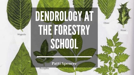 Dendrology_Forestry_Patti_Spencer blog header