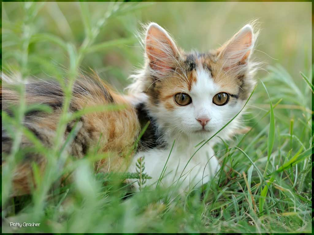 photo of cute kitten in green grass - playable as a jigsaw puzzle