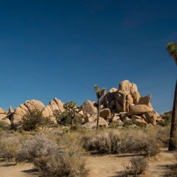 Patty's Epic Trip To The US. Part 16 (final). Joshua Tree National Park