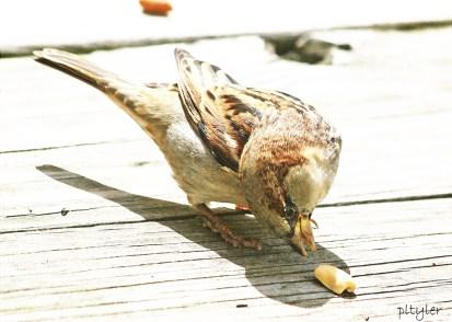 Sparrow10