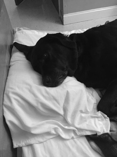 Campbell resting with his head on a pillow