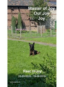 Master Of Joy