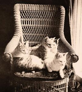 A pile of Mark Twain kittens.