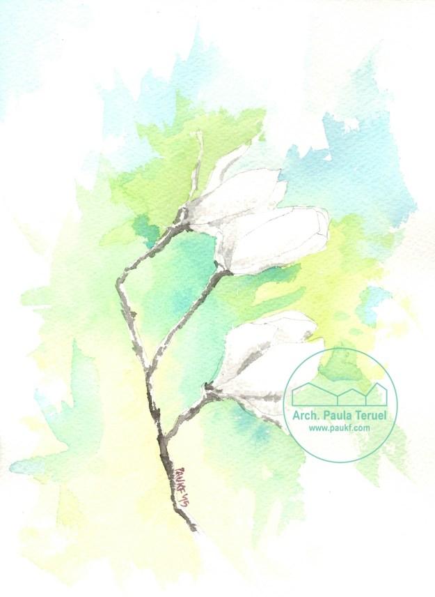 magnolia flor flores paukf pkf watercolor dibujo ilustración acuarela