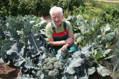 Paula Flums Broccoli im Gemüsegarten