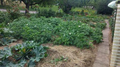 Mein Biogarten