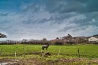 My friend's pony - Littlebury