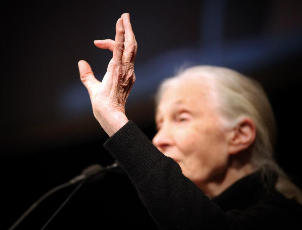 Jane Goodall by Iván Sáinz Pardo
