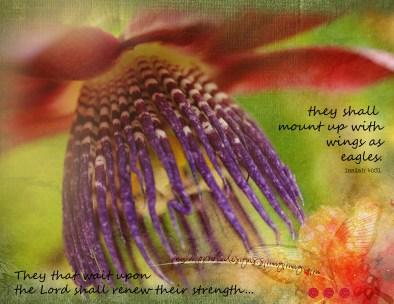 2February_floral calendar_standard_watermark