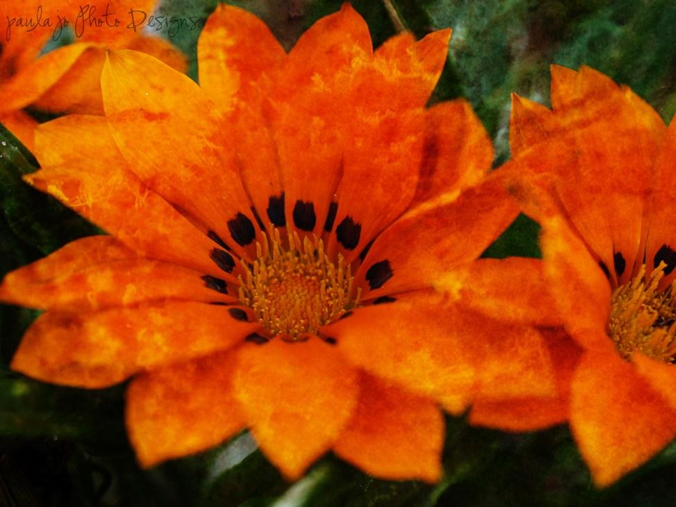 Textured orange flower