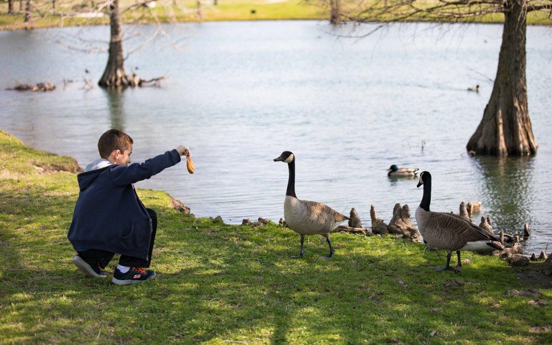 Bethany Lakes Park
