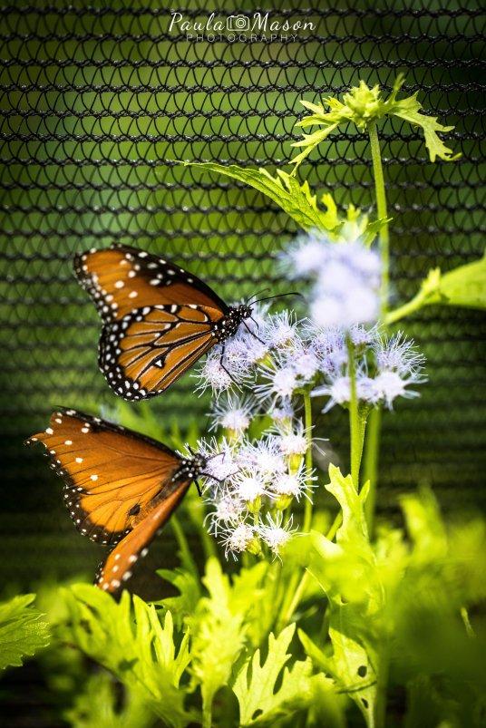 Native Texas Butterfly Garden & House
