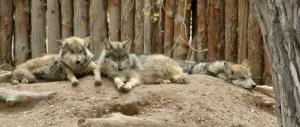 Photo Credit: Albuquerque BioPark via Compfight cc