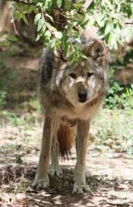Jasmine in her living area. Photo courtesy of Albuquerque BioPark