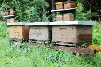 Die Behausungen der Bienen heißen Holzbeuten