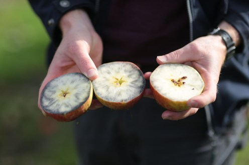 Jod-Stärke-Test Äpfel