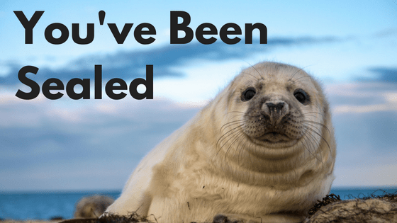 A cute seal on the beach and the words youve been sealed