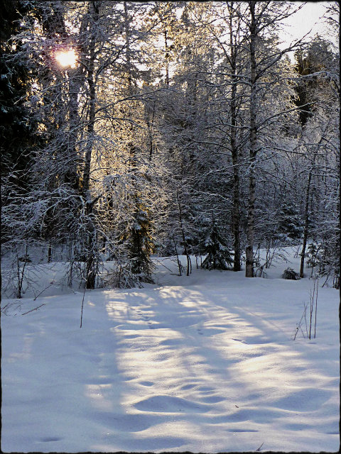 vinterprakt12