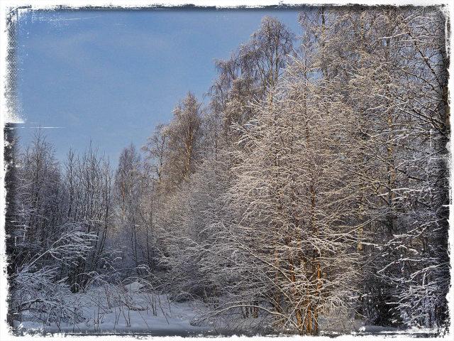 vinterskrud13