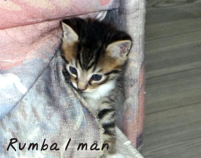 rumba1m
