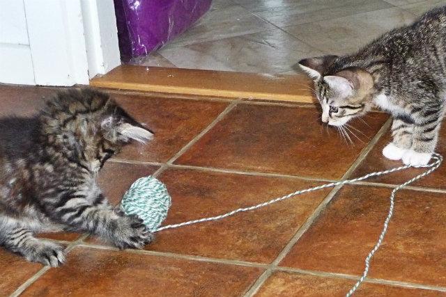 kattermedsnore