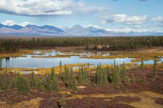 The Boreal Region circles the globe just below the Arctic tundra and just above the temperate zone.