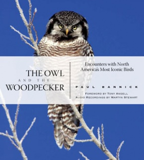 owl and woodpecker cover