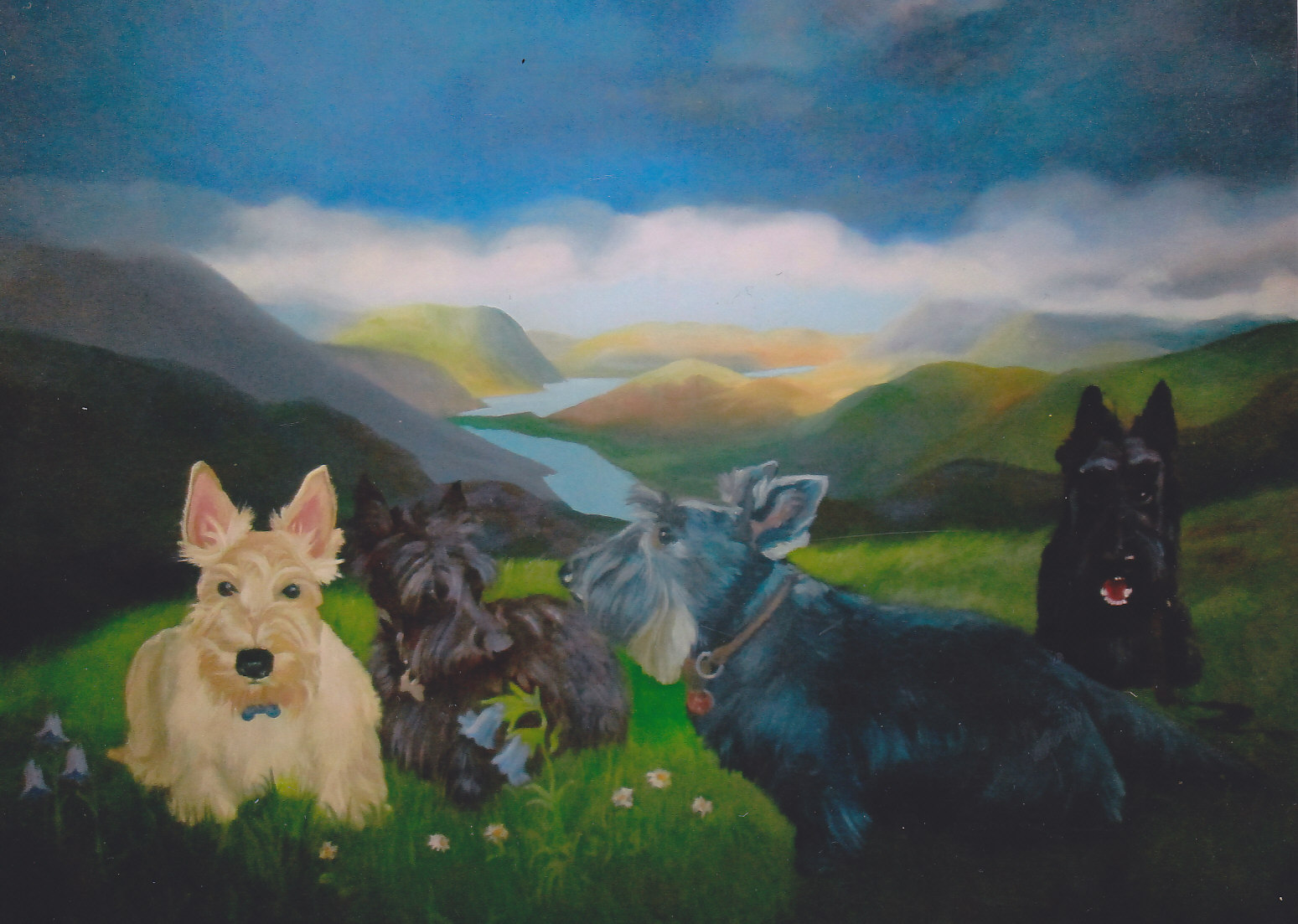Highland terriers_0003
