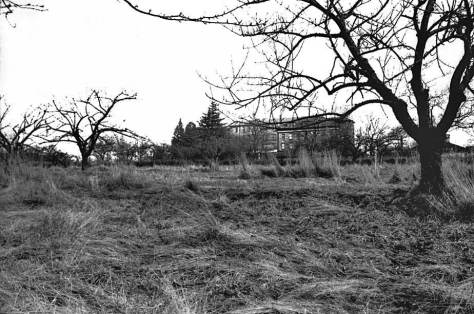 The look east across the temporarily forsaken orchard towards the Good  Shepherd main campus building.  The photographer's back was to Meridian Avenue.