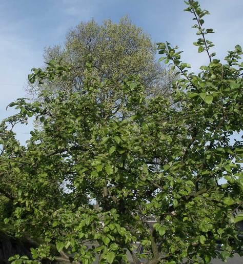 apple-elm-5_1_9-web