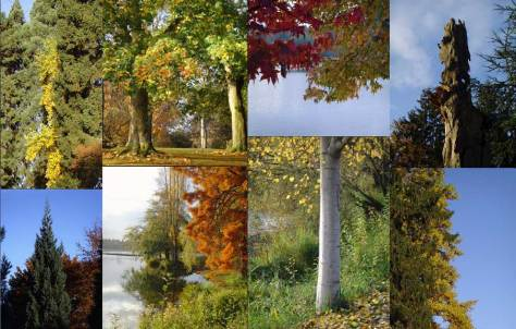 "Some of the ""autumnal structure"" along the shores of Green Lake, 10/26/9."