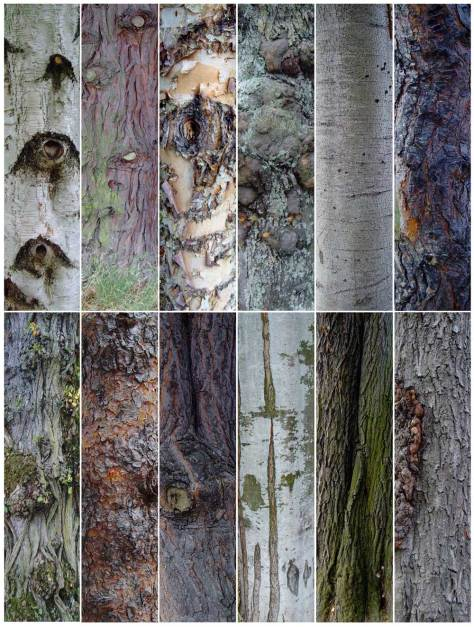 Perhaps among our many enthused readers is a bark expert who will share the names with John and the rest of us, starting top-left, moving right and numbered one through 12.