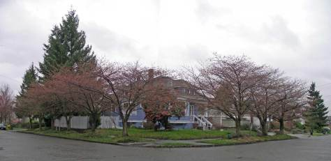 46th and Corless, southeast corner, Seattle's Wallingford Neighborhood, on the afternoon of March 8, 2007.