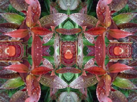 Mandala-No.1-Rain-on-Neighbor's-Leaves-ca.-2009-WEB
