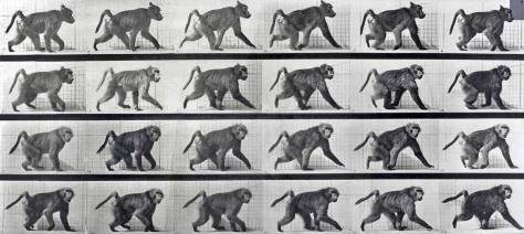 One of Muybridge's early motion studies, and not a Seattle subject necessarily.