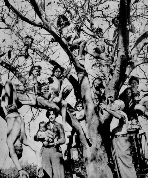 ESTES CONDUCTS HIS KIDS IN A TREE LIKE NOTES ON A MUSICAL STAFF - LIFE MAGAZINE NOV. 21, 1938
