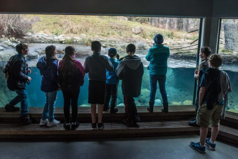 Hillside students fascinated by a playful otter