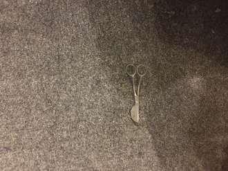 Dog damage after