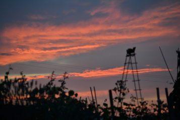 Bradner Gardens Sunset